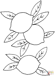 lemon 1 coloring page free printable coloring pages