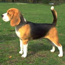 best family dogs american kennel club