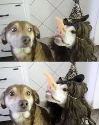 Witch Meme - witch dog meme guy