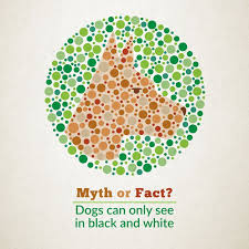 What Causes Red Green Color Blindness 299 Best Vision Images On Pinterest Eye Facts Optometry And Eyewear