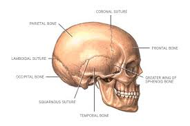 Base Of The Skull Anatomy Anatomy U2013 The American Center For Spine And Neurosurgery