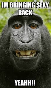 Sexy Monkey Meme - bringing sexy back