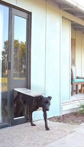 Interior Pet Door For Cats Cat Door For Sliding Glass Door Home Interior Design