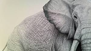 drawing an elephant youtube