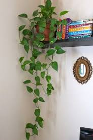 Top  Best Indoor Hanging Plants Ideas On Pinterest Hanging - Home decoration plants