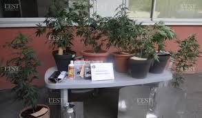 chambre de culture cannabis fait maison edition de bar le duc le cambriolage mène aux plants de cannabis