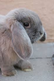 2098 best some bunny loves you images on pinterest animals baby