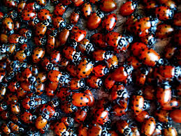 fun facts about ladybugs topbest blog