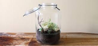 variegated sedum in large italian glass terrarium planted pots