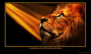wallpaper lion tribe judah amazing lion