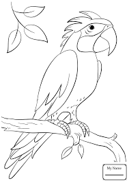 coloring pages parrots birds cockatoo bird colorpages7