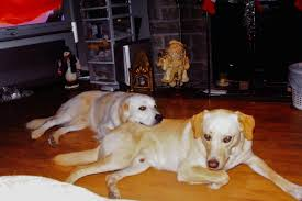 marineland owner john holer shot dead neighbours u0027 dogs according