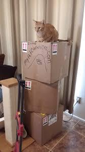 fedex thanksgiving weekly fedex shipping my pet carnivore