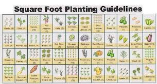 Square Foot Garden Layout Ideas Square Foot Gardening Layout Corn Home Deco Plans