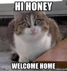 Welcome Home Meme - obsessive cat meme cat best of the funny meme