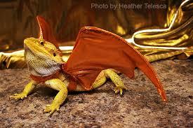 Bearded Dragon Halloween Costume Snake Created Dotpict Baardagaam Snake