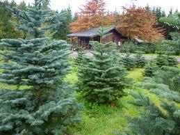 our trees bowen tree farm
