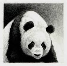 panda pencil drawing u0027out of the dark u0027 by gillianmcmurray on etsy