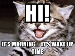 Happy Kitten Meme - hi it s morning it s wake up time happy kitten meme generator