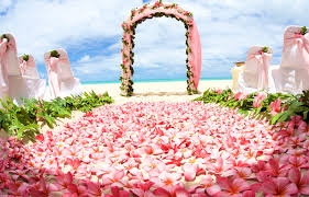 r s baby pink hawaii wedding theme with trellis