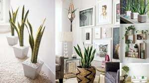 home decor 6 creative ways to include indoor plants into your home décor