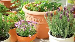 how to prepare and use indoor herb pots terracotta container