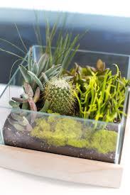 decorating with succulents u2014 mod abode