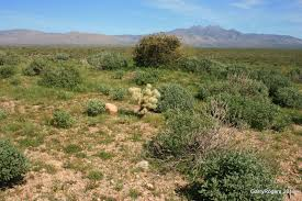 native sonoran desert plants sonoran desert fire ecology update garryrogers nature conservation