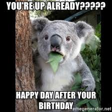 Day After Birthday Meme - you re up already happy day after your birthday koala can t
