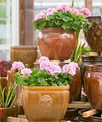 custom potting tlc garden centers