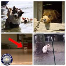 chained dogs left to die all alone after hurricane harvey flood