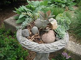 spirit halloween janesville wi super succulents rotary botanical gardens