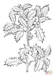 holly coloring pages christmas wreaths and holly coloring page