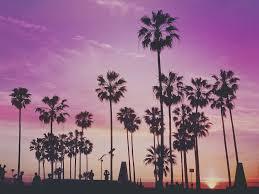 free photo tropical palm trees miami free image on pixabay