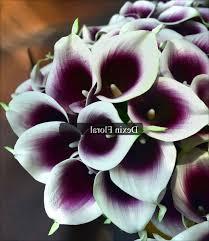 black calla buy black calla bills garden