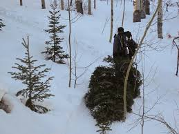 christmas tree cutting denverdavis
