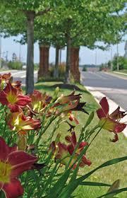 Landscape Management Services by Landscape Management Contract Services Professional Grounds