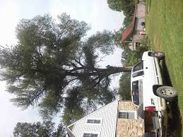 affordable tree service crossville tn affordable tree service landscaping home