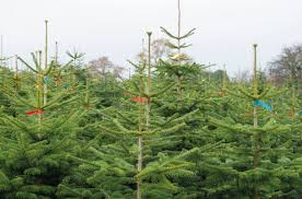 win a stockeld tree stockeld park