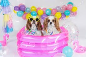 dog birthday party dog cake smash dog birthday party