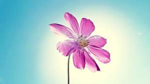 Flower Wallpaper Flower Wallpaper Hd Photos 3391 Wallpaper Download Hd Wallpaper