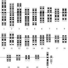 mutations in chromosomes