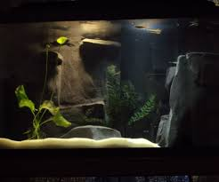 river aquarium with custom concrete 3d background 10 steps