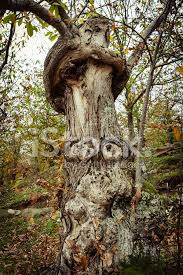 human shape on tree stock photos freeimages