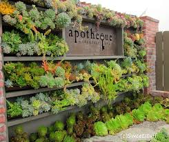 wow this is gorgeous thank you for the display succulent cafe