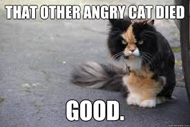 Angry Cat Good Meme - angry cat pictures with captions that other angry cat died good
