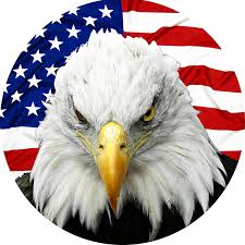 Bald Eagle And American Flag Amazon Com Tire Cover Central Eagle Tire Cover Please Select
