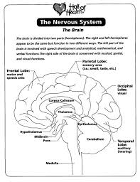Nervous System Coloring Pages Many Interesting Cliparts Brain Coloring Page