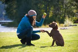 the importance of exercise for your dog kauffman u0027s animal health