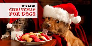 dog christmas woof christmas dog treats and dog christmas dinners